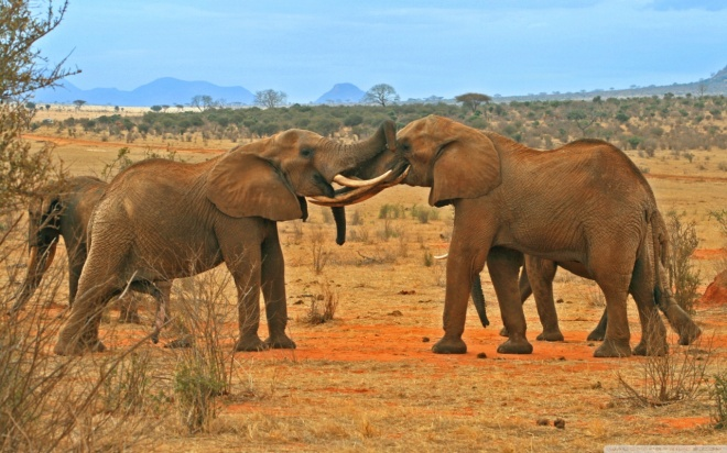 Flights to Kenya from London for only £219