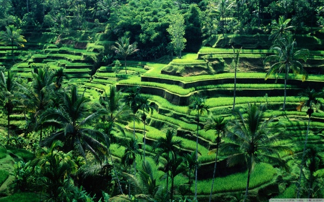 Open Jaw Flights to Jakarta for 337€ - with Emirates A380!